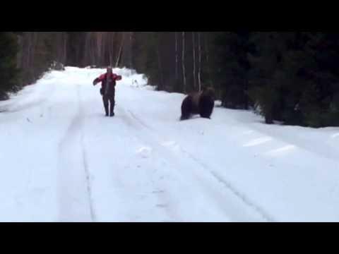當野熊撲過來時,這男子不但沒有裝死或逃跑,而且把野熊嚇跑了!