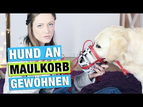 MAULKORBTRAINING | Hund an MAULKORB gewöhnen | Training | Hundekanal