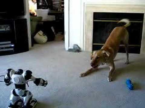 Cachorro vs. Robot