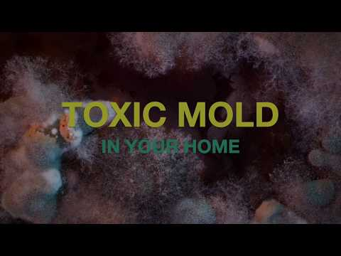 Common Signs You Have Toxic Mold in Your Home