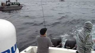 Nonton Coho Fishing on Swiftsure Bank, Vancouver Island BC Film Subtitle Indonesia Streaming Movie Download