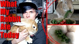 What My Rabbit Ate Today! (Vegan) | $2 Coupon by Tyler Rugge