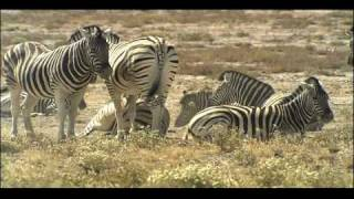 Biomes Savanna | Biology | Ecology