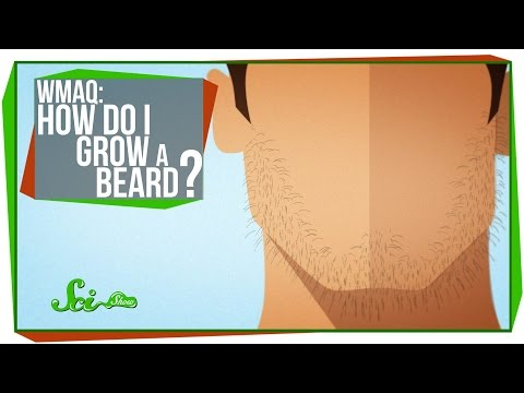 "I - People ask Google everything under the sun. One of the most commonly searched questions in the world is ""How do I grow a beard?""? Let SciShow explain. Don't forget to ask YOUR most pressing..."