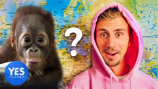 Video Letting a Monkey Decide which Country we Fly to... MP3, 3GP, MP4, WEBM, AVI, FLV Januari 2019