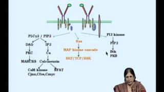Mod-04 Lec-08 Signaling In B Cells