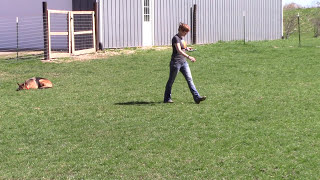 Stella the German Shepherd Training with Maggie