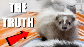 SKUNKS AS PETS - What You Need To Know   EMZOTIC by Emzotic