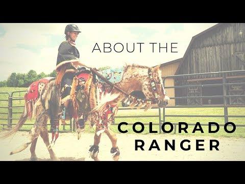 About the Colorado Ranger Horse
