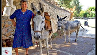 When their owner died, these two senior donkeys had nowhere to go by The Orphan Pet