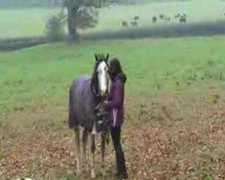 這匹馬發現離開3個星期的主人回來後先是愣了一下,接著下一秒牠的反應讓主人沒有後悔那麼疼惜牠啊!