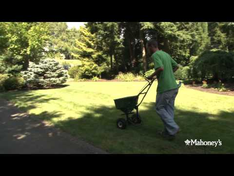 Kristina, one of Mahoney's Lawn Care specialists, talks about over-seeding your lawn.