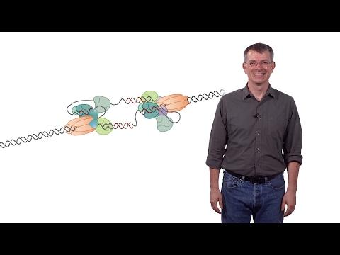 Stephen P. Bell (MIT / HHMI) 1a: Chromosomal DNA Replication: The DNA Replication Fork