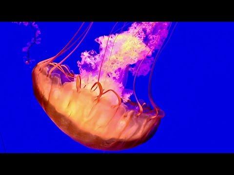 Springfield, MO – Johnny Morris Wonders of Wildlife National Museum & Aquarium – Travel Series Ep. 3