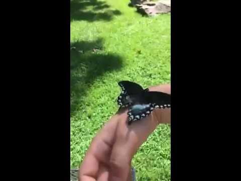 這男生將撿到的毛毛蟲帶回家悉心照料等著牠化蝶,完整的過程讓大家看到最後都要噴淚了!