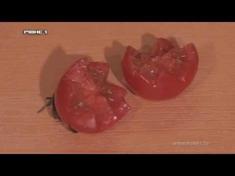 """Приготування соковитої телятини під вершковим соусом у програмі """"Кулінарний туризм"""""""