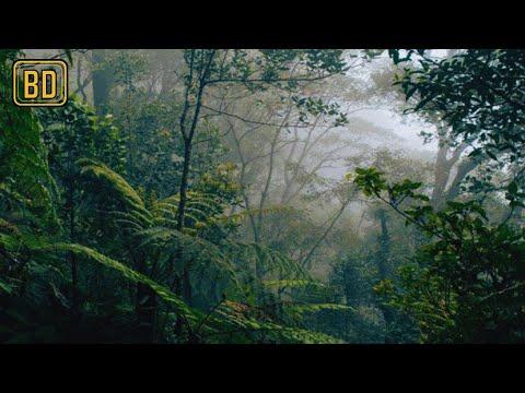 Suara Hutan Yang Mengagumkan - Suara Alam Indonesia