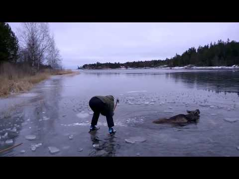 Guy Ice Skaters Save A Poor Moose