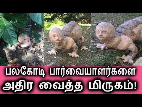 மனிதனாக மாறும் அதிசயம்? | Tamil Cinema News | Kollywood Tamil News | Tamil News