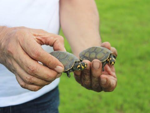 Corporinoquia y Cornare devolvieron fauna silvestre a su hábitat producto de tráfico ilegal