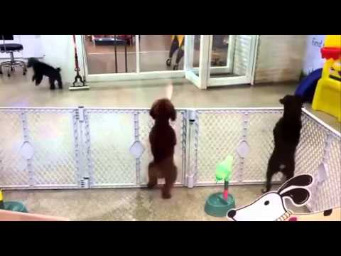 Excited puppy spots it