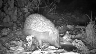 Wildlife Trail Camera - 11.10.2016