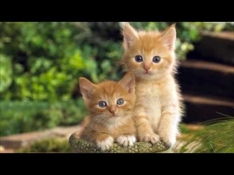 Kittens Meowing- Sound Effects