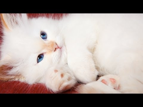 Why Cats Purr | Cat Care