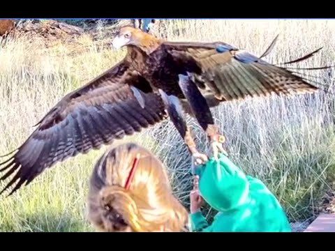 Eagle Tries to Snatch Boy