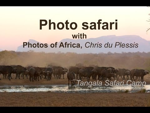 Video of Tangala Safari Lodge