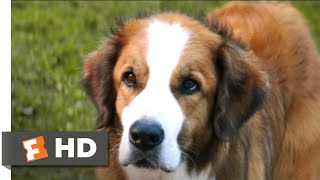 Nonton A Dog's Purpose (2017) - The Right Fit Scene (9/10) | Movieclips Film Subtitle Indonesia Streaming Movie Download