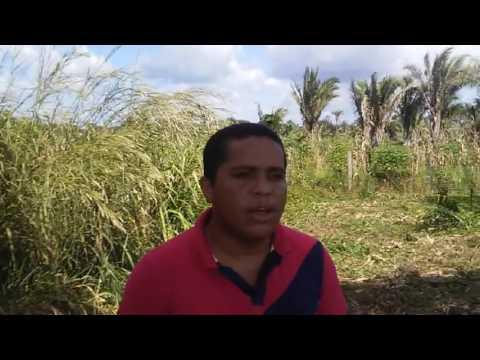 Vereador Elisvaldo Martins Elogia Agricultura Em Tufilândia