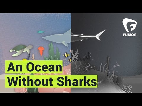 Speel How would the ocean look like without sharks? af