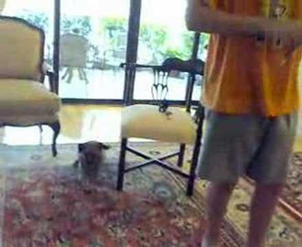 Dog Sings The Vivaldi Concerto