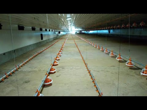 Investing In Poultry Farming[ (http://westgateintegrity.com/)]