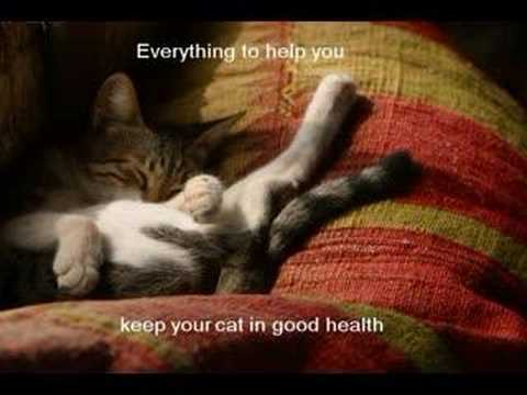 Products for a Healthy Kitty