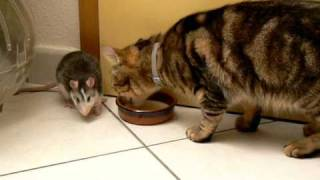 Cat And Mouse Share Food. Make Love, No War :))