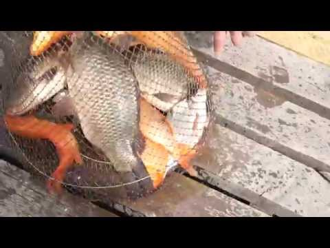 детская рыбалка в калиновке