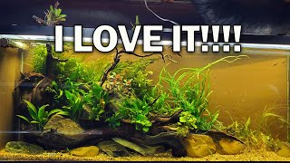 Adding new Plants, the new fish, BiOrb, and MORE! by Rachel O'Leary