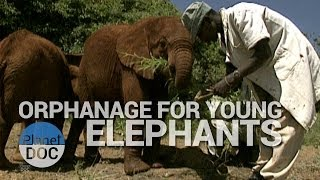 Orphanage For Young Elephants | World Curiosities - Planet Doc Full Documentaries