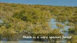 Mangrove Plantation in the context of the International Day for Biological Diversity in collaboration with the SCB–Standard Chartered Bank (Mauritius) Limited ...