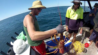 Streaky Bay Australia  City pictures : Crayfish, Streaky Bay South Australia