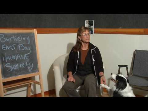 Dog Care & Training : Creative Ways to Stop a Dog From Barking