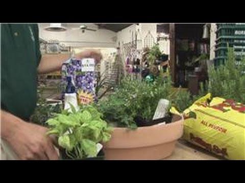 Beginners Vegetable Gardening : Herb Garden Basics