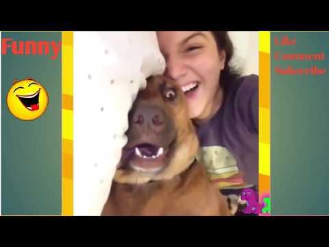 Download Video Vidio Anjing Jilat Itunya Majikannya Mantap Banget!! Funny Animal Best Ever 2017