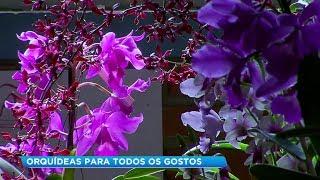 Raridade e beleza encantam visitantes em exposição de orquídeas