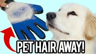 Can This Stop Pets From Shedding? Testing WEIRD Pet Gadget! full download video download mp3 download music download