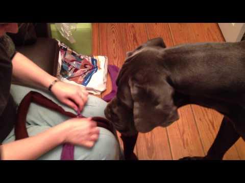 Hundespielzeug Fleece-Tampen Anleitung