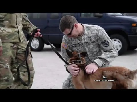 Soldier Service Dog Reunite Months After They Were Injured In Afghanistan