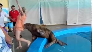 Zboczony lew morski i jego sposoby na obchodzenie się z kobietami…
